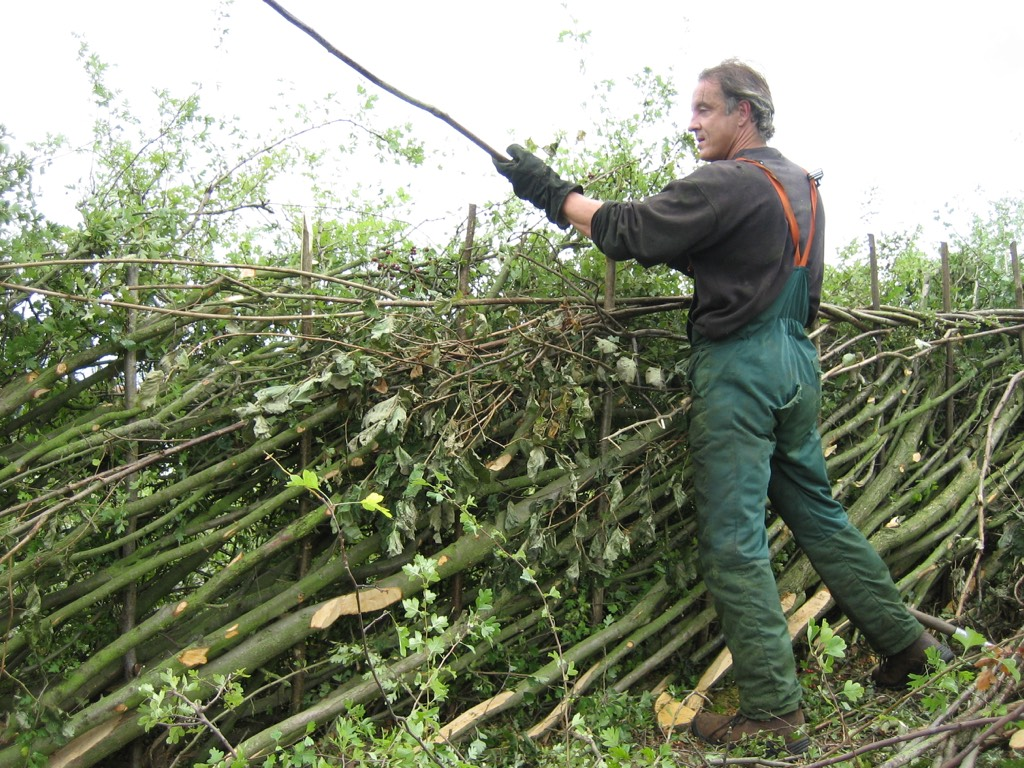 Hedgelaying - Nigel Adams, Countryside Management