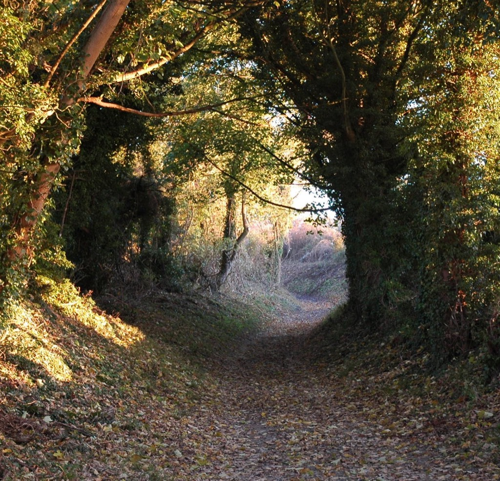Sunken lane up to Grangelands and Pulpit hill by Tracey Adams_cropped