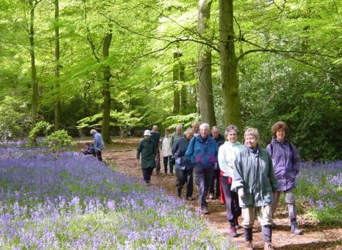 Walkers in Bottom Wood