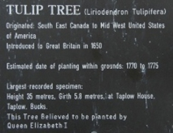 Celebrations for a royal wedding Champion_Tulip_Tree_plaque