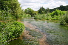 River Chess Chalk Stream