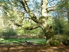 Naphill Common by John Morris